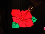 「ツインドラゴンハナハナ-30」内覧会を開催(パイオニア)